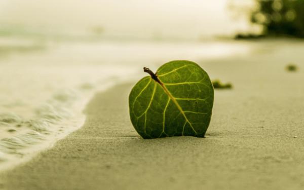 Zielony liść na plaży.