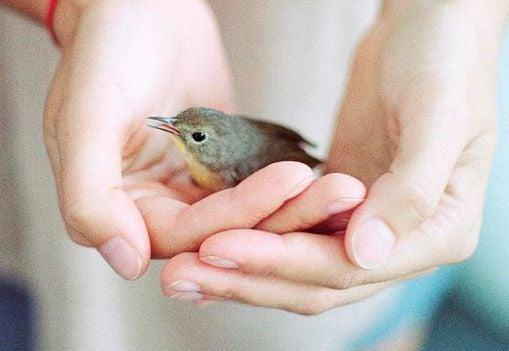 Mały ptak w dłoniach