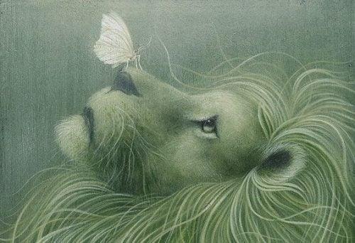 Motyl na nosie lwa