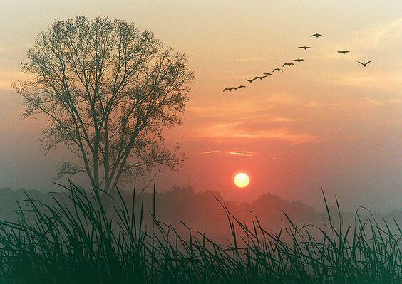 Drzewo o zachodzie słońca i lecące ptaki.