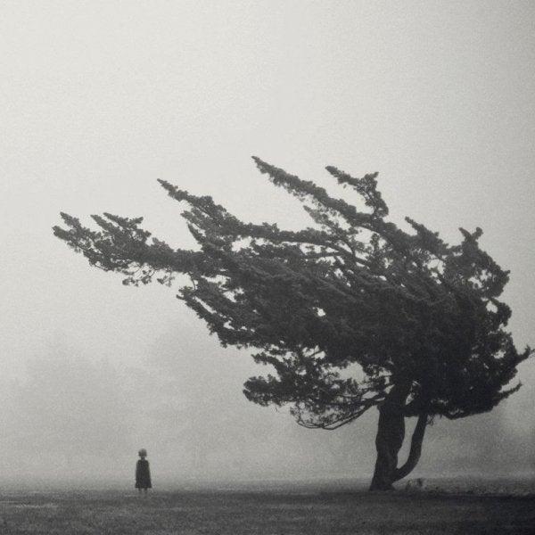 Drzewo na wietrze i mała dziewczynka.