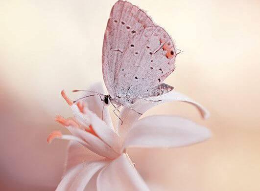 Motyl na kwiatku.