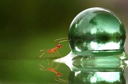 Mrówka i kropla wody