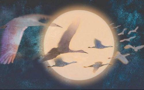 Postępowanie pozytywne - Ptaki lecą w świetle księżyca