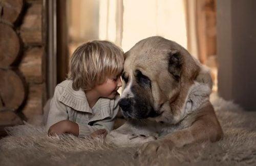 Chłopiec i pies leżą na dywaniku