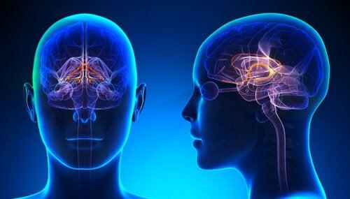 Ciche dni – zmiany w mózgu