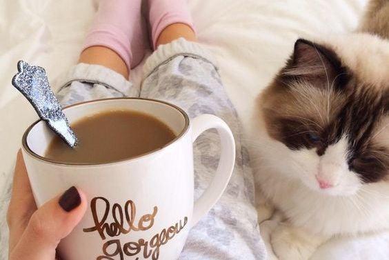 poranek, kawa i kot