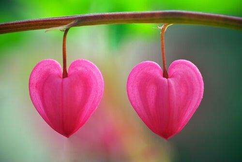 Kwiat w kształcie serca - mentalne ubóstwo
