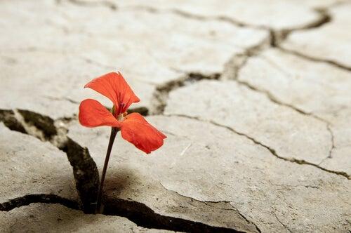 Kwiatek rośnie na skale - wytrzymałość
