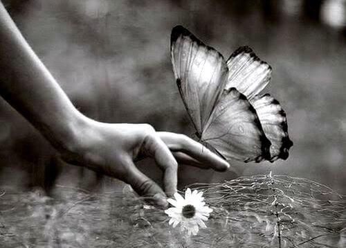 Kwiatek i motyl