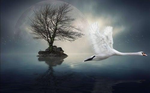 Łabędź lecący na laguną.