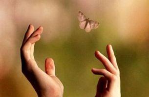 Dlonie próbujące złapać motyla.