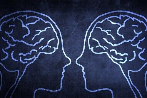 Neurony lustrzane - czym są i jaką pełnią funkcję?
