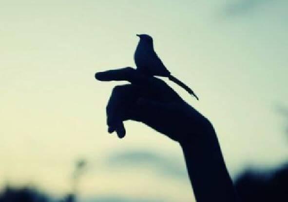 Ptaszek na ręku.