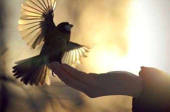 Ptaszek na dłoni.