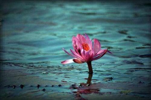 Adaptacja - Różowy kwiat