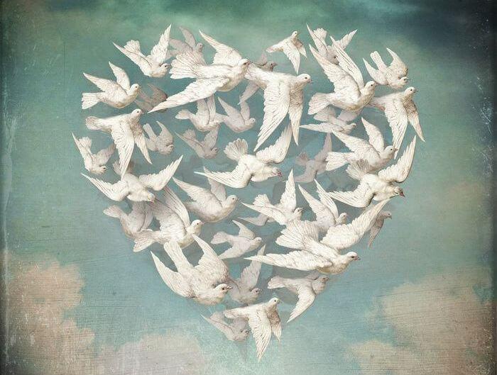 Serce ułożone z lecących gołębi.