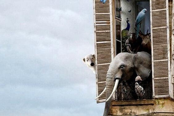 Dzikie zwierzęta w oknie.