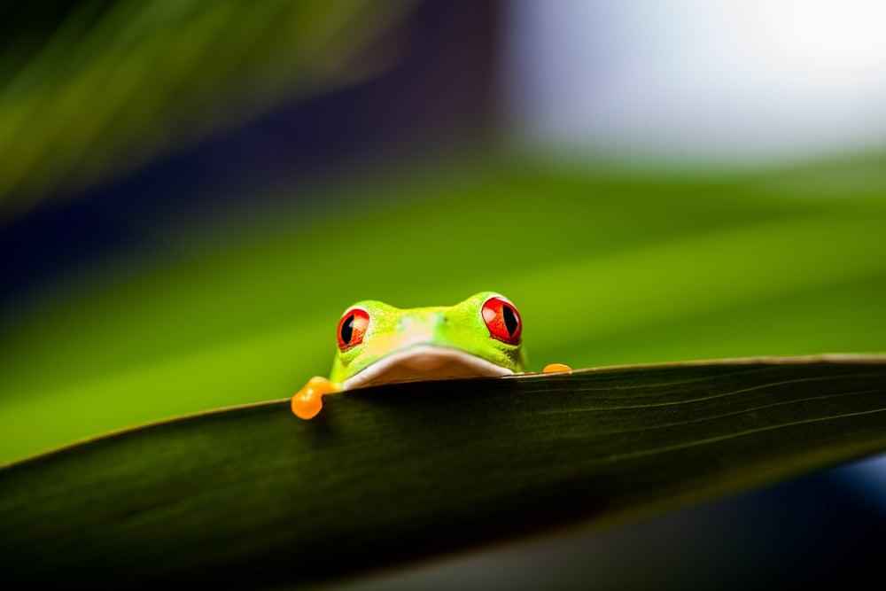 żaba za liściem - syndrom gotującej się żaby