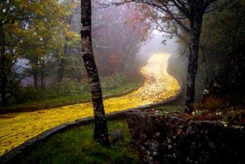 Odpuszczać - Złota ścieżka w lesie