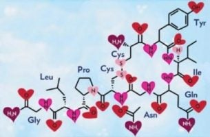 Oksytocyna hormon miłości i szczęścia