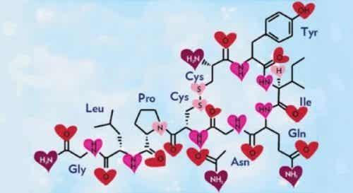 Oksytocyna, hormon miłości i szczęścia