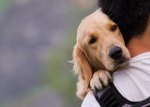 Człowiek i pies to najlepsi przyjaciele