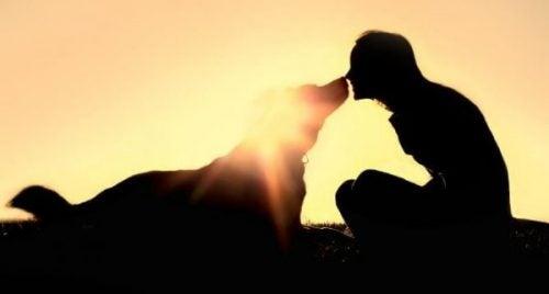 Człowiek z psem dotykają się nosami na łące
