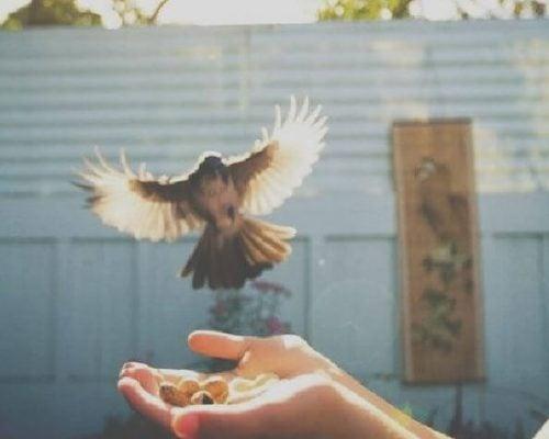 Ptak ląduje na wyciągnięte dłonie