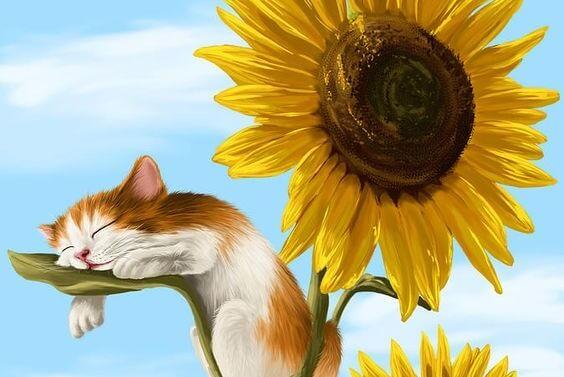 słonecznik i kot