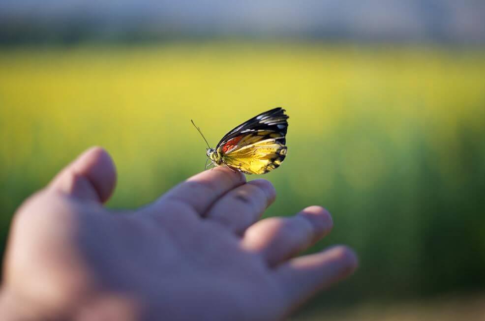 Motyl na dłoni.
