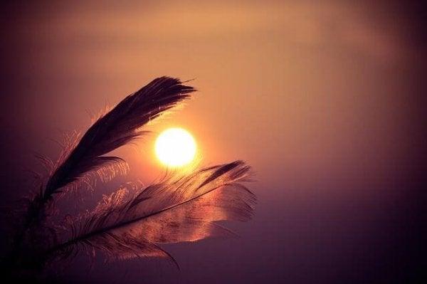 Afrykańska opowieść - pióra na tle zachodu słońca.