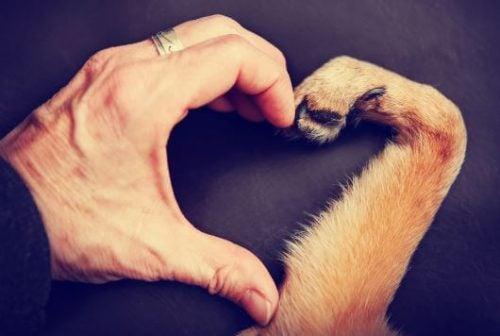 Dłoń i łapa psa tworzą serduszko