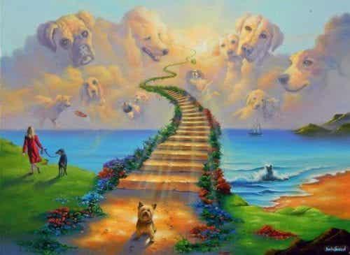 Tęczowy Most – miejsce, gdzie trafiają nasze zwierzęta