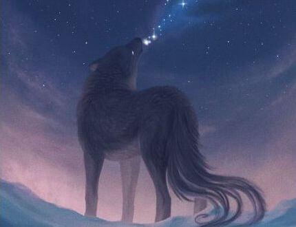 Wyjący wilk.