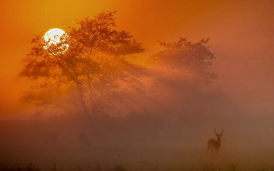 Antylopa i zachód słońca.