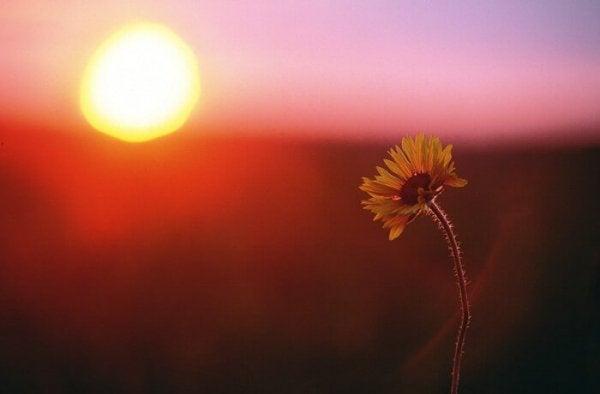 Kwiatek na tle zachodu słońca.