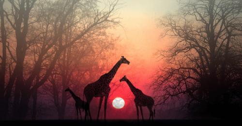 Afrykańska opowieść – zatrzymaj się po to, by dusza mogła cię dogonić