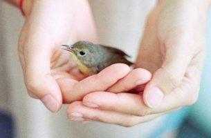 Chory ptaszek w dłoniach
