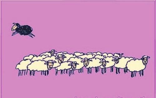 Czarna owca i wielkie znaczenie uczciwości