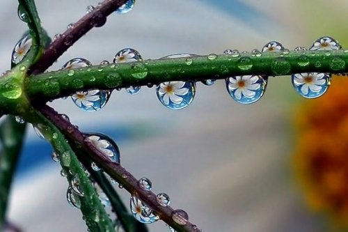 Krople rosy na gałązce.