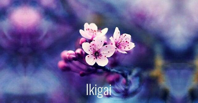 kwiat wiśni - ikigai