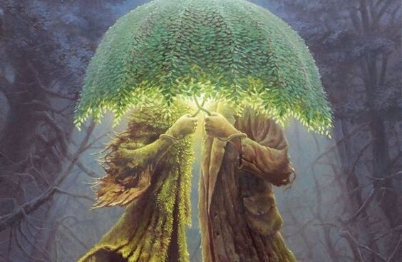 Para-drzewo.