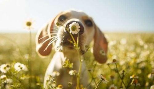 Uzdrawiająca moc psów