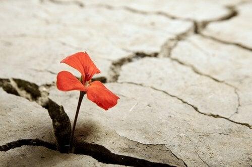 Czerwony kwiatek wyrastający ze szczeliny.