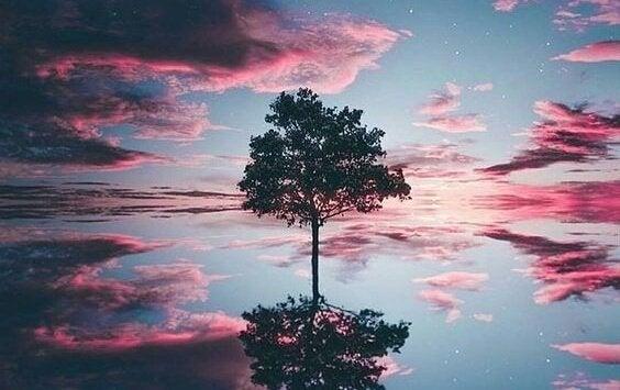 drzewo na horyzoncie