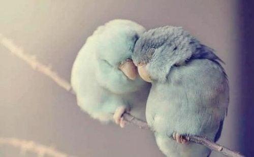 Dwa ptaki tulą się do siebie