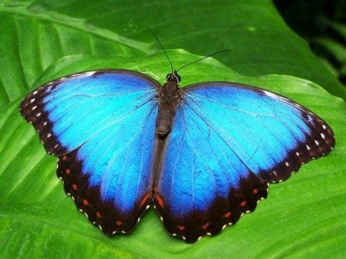 Historia motyla, który myślał, że nadal jest poczwarą