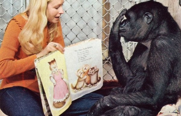 Koko i czytanie bajek.