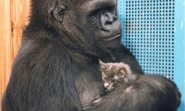 Koko z kotkiem.